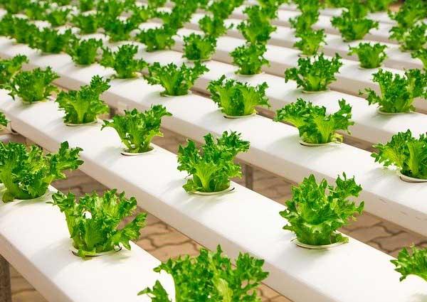 Rumshock Veterans Foundation hydroponic gardening